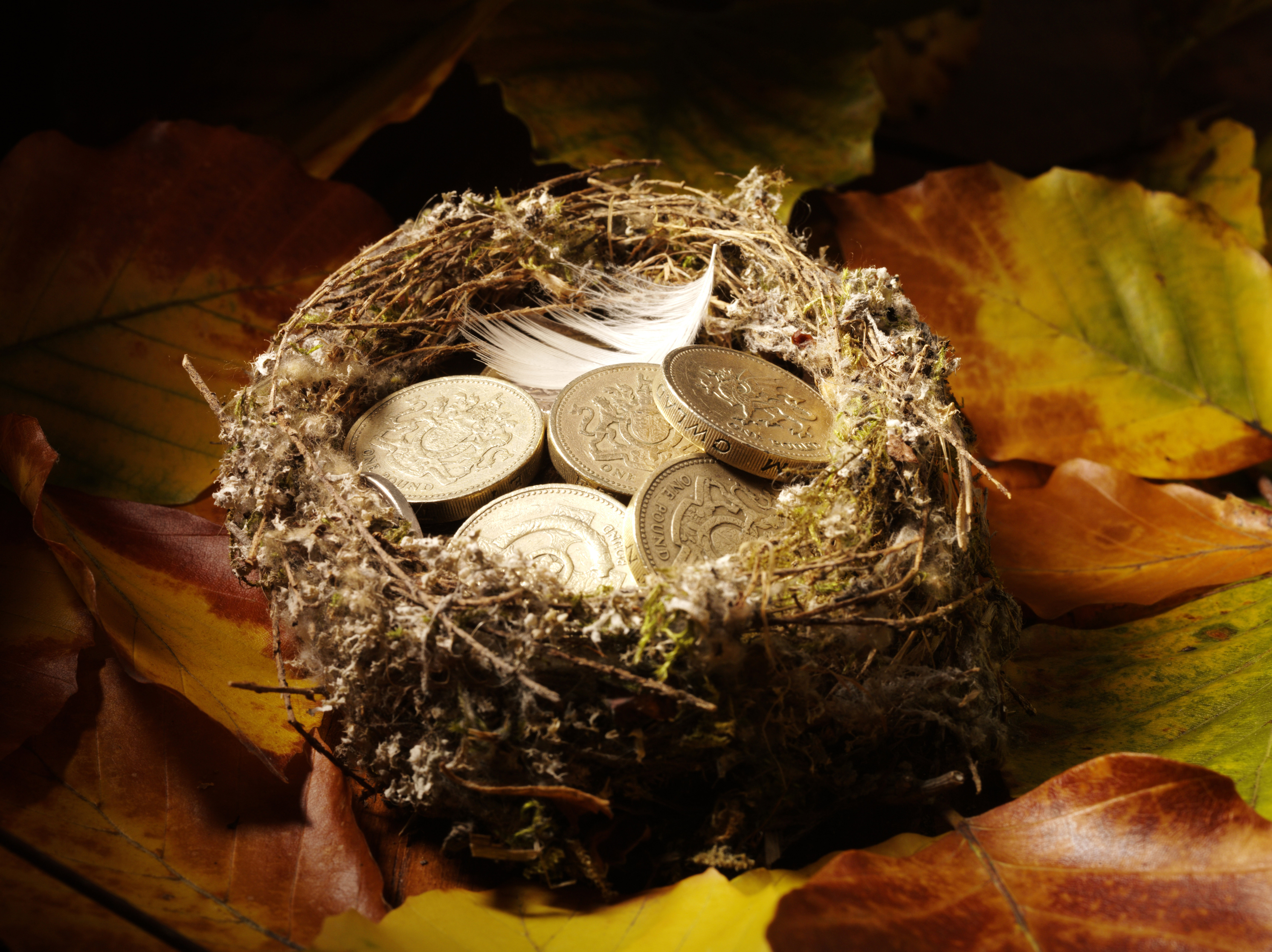 pension_graphic_nest